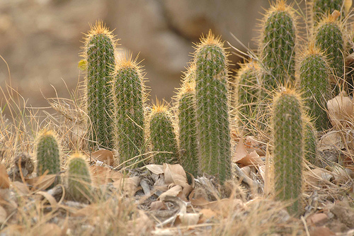 Fit Friday 10/23/2015 – You Are NOT A Cactus!
