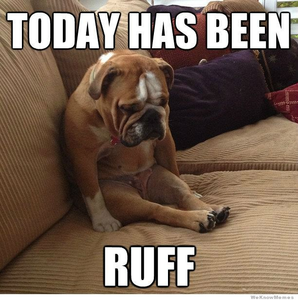 Today Has Been Ruff Dog